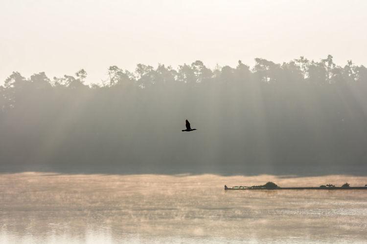 Misty Reflection Sunrays Beauty In Nature Bird Day Flying Fog Hazy  Lake Landscape Mist Misty Morning Sky Water