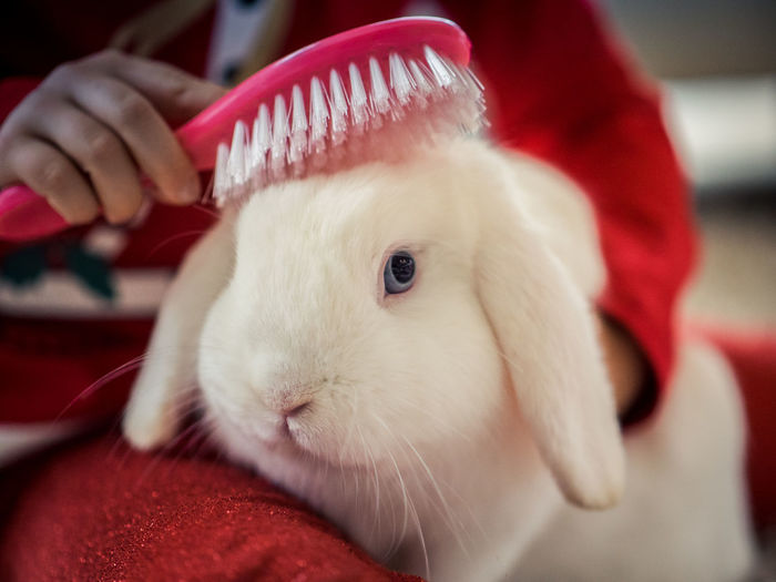Animal Themes Close-up Day Domestic Animals Focus On Foreground Food Hamster Human Body Part Human Hand Indoors  Mammal One Animal One Person People Pets Rabbit Red White