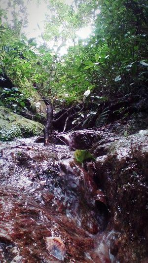 Nature Water Outdoors Tree Growth Beauty In Nature Close-up Woods Hiking Hikingadventures Hiking Trail Hiking Adventures Hike Hiker Hikerslife Hikingphotography Mountain Mountain Hiking