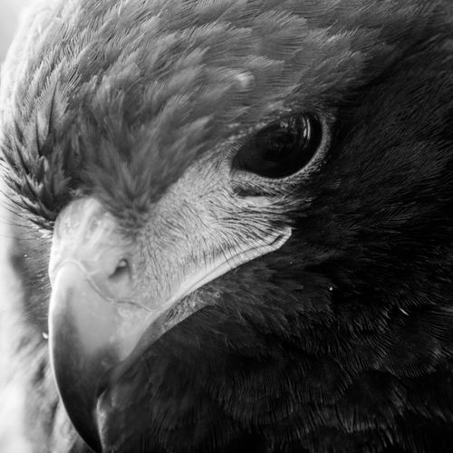 Animal Themes Animal Wildlife Animals In The Wild Bird Close-up Day Mammal Nature No People One Animal Outdoors