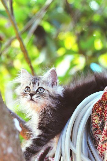 Animal Themes Cat Lovers Cats Of EyeEm Cats 🐱 Cat Kitten 🐱 Pets Portrait Domestic Cat Looking At Camera Feline Cute Close-up Kitten Persian Cat  Siamese Cat Tortoiseshell Cat Whisker Maine Coon Cat