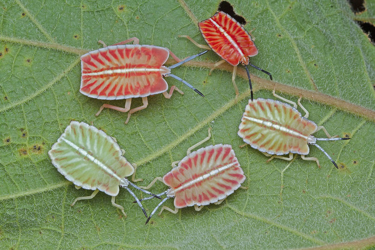 High angle view of insects on leaf