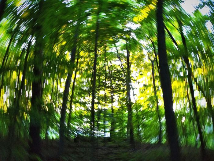 lost in the forest Blurry Park Trees EyeEm Selects Toronto Woods Lostinthewoods Cabin In The Woods Lost In The Woods Greenery Autumn colors Summer Tree Bamboo - Plant Tree Area Forest Tree Trunk Branch Bamboo Grove Leaf WoodLand Sky Rainforest Sunrays Path Lush Foliage Green Grassland