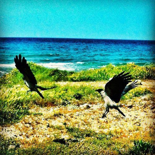 At חוף הים