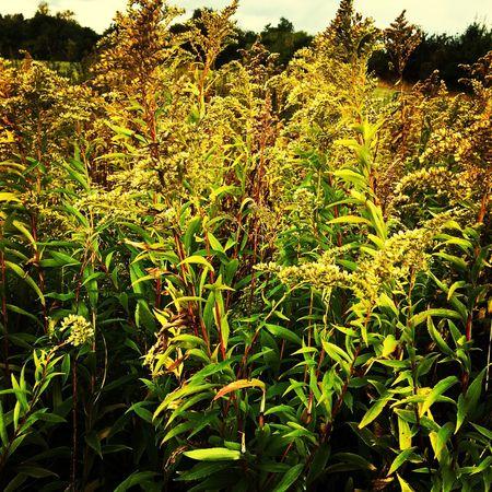 Autumn Plant Denmark Nature First Eyeem Photo