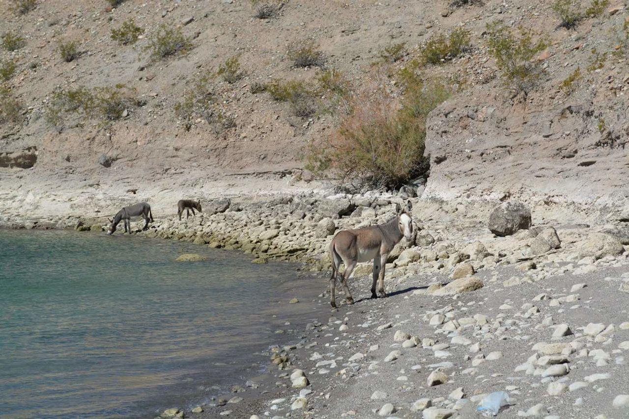 Donkeys At Lakeshore Against Mountain