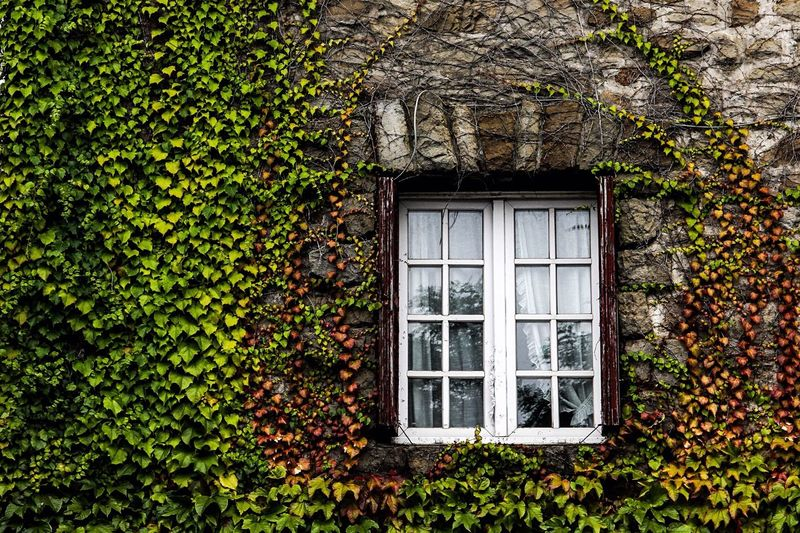 Secret Garden Green Original Experiences