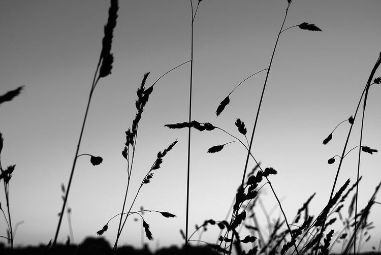 Black & White Beauty In Nature Black And White Close-up Growth Nature No People Outdoors Plant Sky Wild Herbs