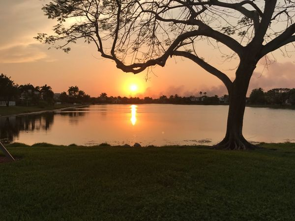 Suburban sunset Water Sky Sunset Plant Tree Beauty In Nature Scenics - Nature Tranquility Lake Tranquil Scene Reflection Nature No People Orange Color Silhouette Outdoors Idyllic Cloud - Sky Sun
