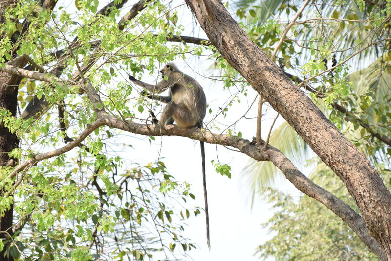 The Monkey With His Long Tail..... EyeEm Animal Lover Monkey Spring Spring Has Arrived Spring Is In The Nature Wonder Of Nature Eliment Of Nature Eyeem X Whitewall: Animals Eyeem X Whitewall: Nature EyeEm Nature Lover From My Point Of View Eye4photography  Eyeem4photography Check This Out Eyeem Best Click Eyeem Best Image EyeEm Best Shots Getty Images EyeEm Gallery EyeEm Pastel Power