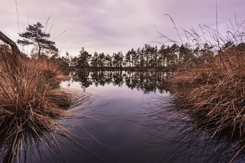 Reflection Over the Sea Landscape_Collection Landschaft Lüneburger Heide Bare Tree Beauty In Nature Cloud - Sky Day Germany Lake Landscape Landscape_photography Landscapes Moorland Nature No People Outdoors Plant Reflection Scenics Sky Standing Water Tranquil Scene Tranquility Tree Water This Is Masculinity EyeEmNewHere