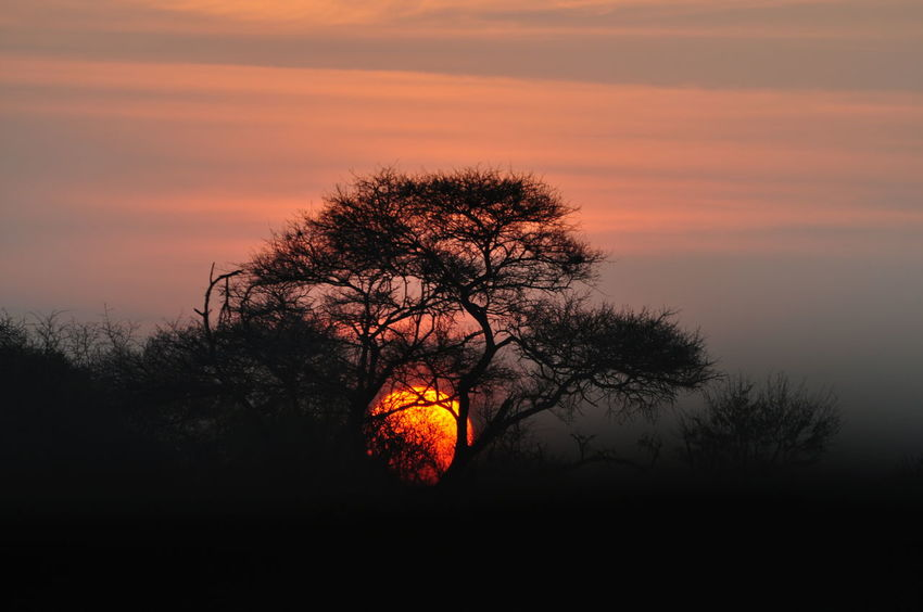 Sunset in Madikwe Madikwe Nature Nature Photography No People South Africa South Africa Is Amazing South African Sun Sunset Wildlife Wildlife Photography Wildlife Photos