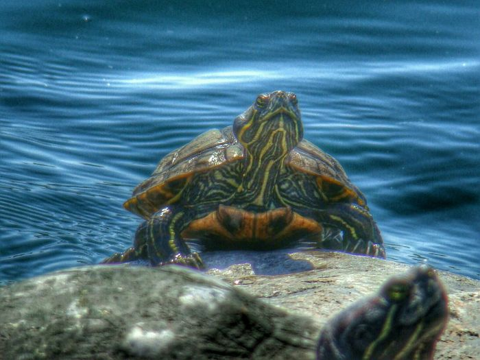 Lifeisabeach Hanging Out Taking Pictures Macro Animal Love EyeEm Macro Macro Nature Animals Posing Turtles Turtles In Da Beach*-*