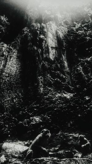 Monkeying Around Adventures Exploring Caves Cavescene Blackandwhite Black & White EyeEm Best Shots EyeEm Nature Lover Shades Of Grey Showcase: January Light And Shadow Black And White Friday