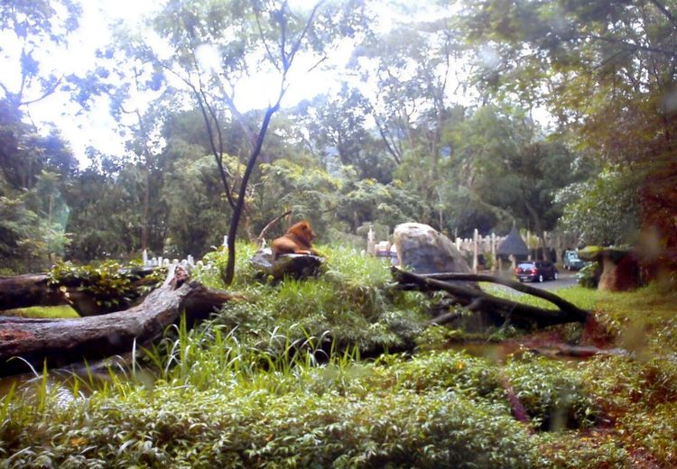 Jungle Land Hanging Out Fauna Wonderful Indonesia