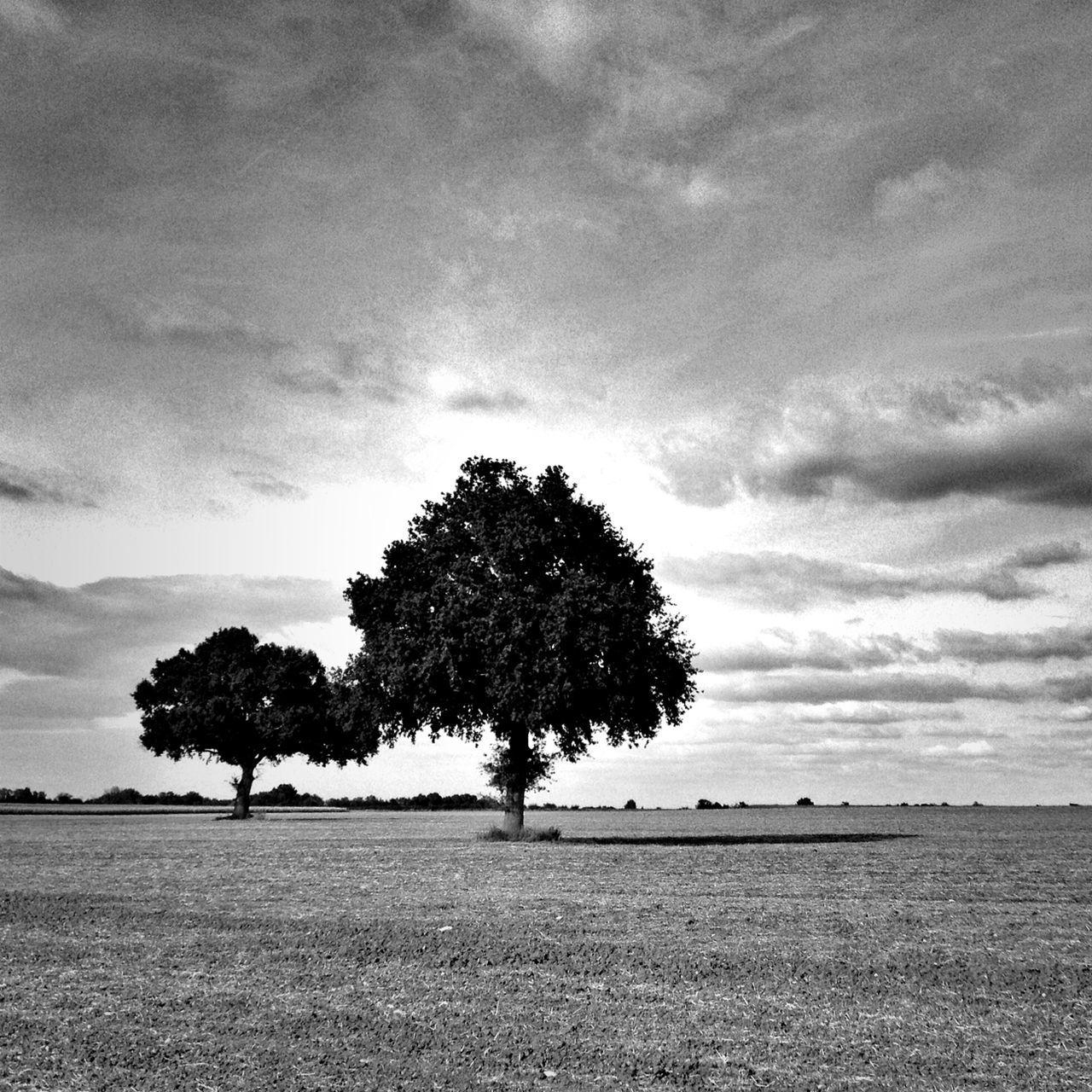 Trees in fields