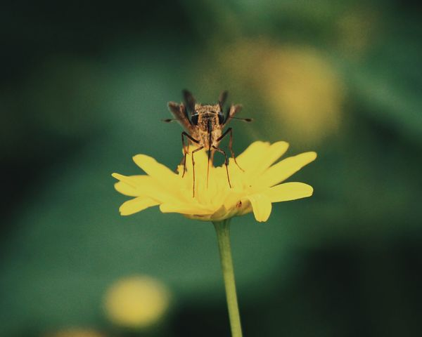 tiny life Nature Insect Flower Fragility Animals In The Wild Animal Themes One Animal Growth Plant Petal Close-up Day Animal Wildlife Yellow Focus On Foreground Freshness Beauty In Nature Flower Head Outdoors No People