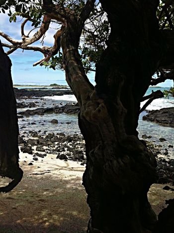 Beautiful Surroundings Beautiful surroundings rroundings / Playa del amor / Caleta Iguana/ galápagos/ Nature Relaxing