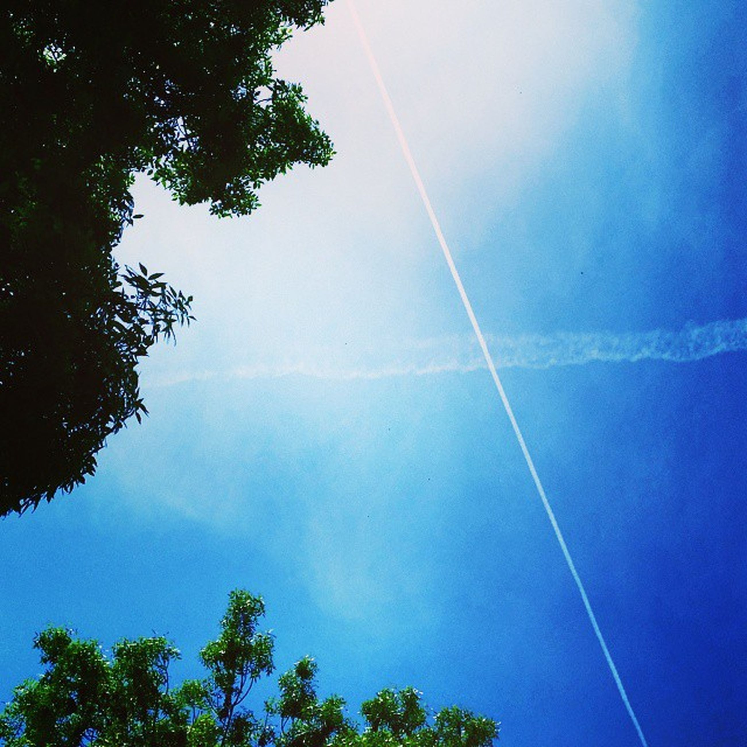 tree, low angle view, sky, tranquility, vapor trail, scenics, blue, beauty in nature, tranquil scene, nature, cloud - sky, idyllic, treetop, outdoors, cloud, day, no people, power line, majestic, growth