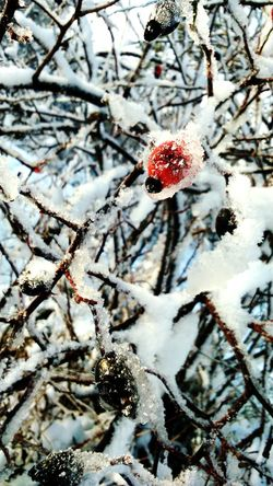 Taking Photos Nature Instagram Webstagram Winter Snow EyeEm Best Shots Popular Photos Popular