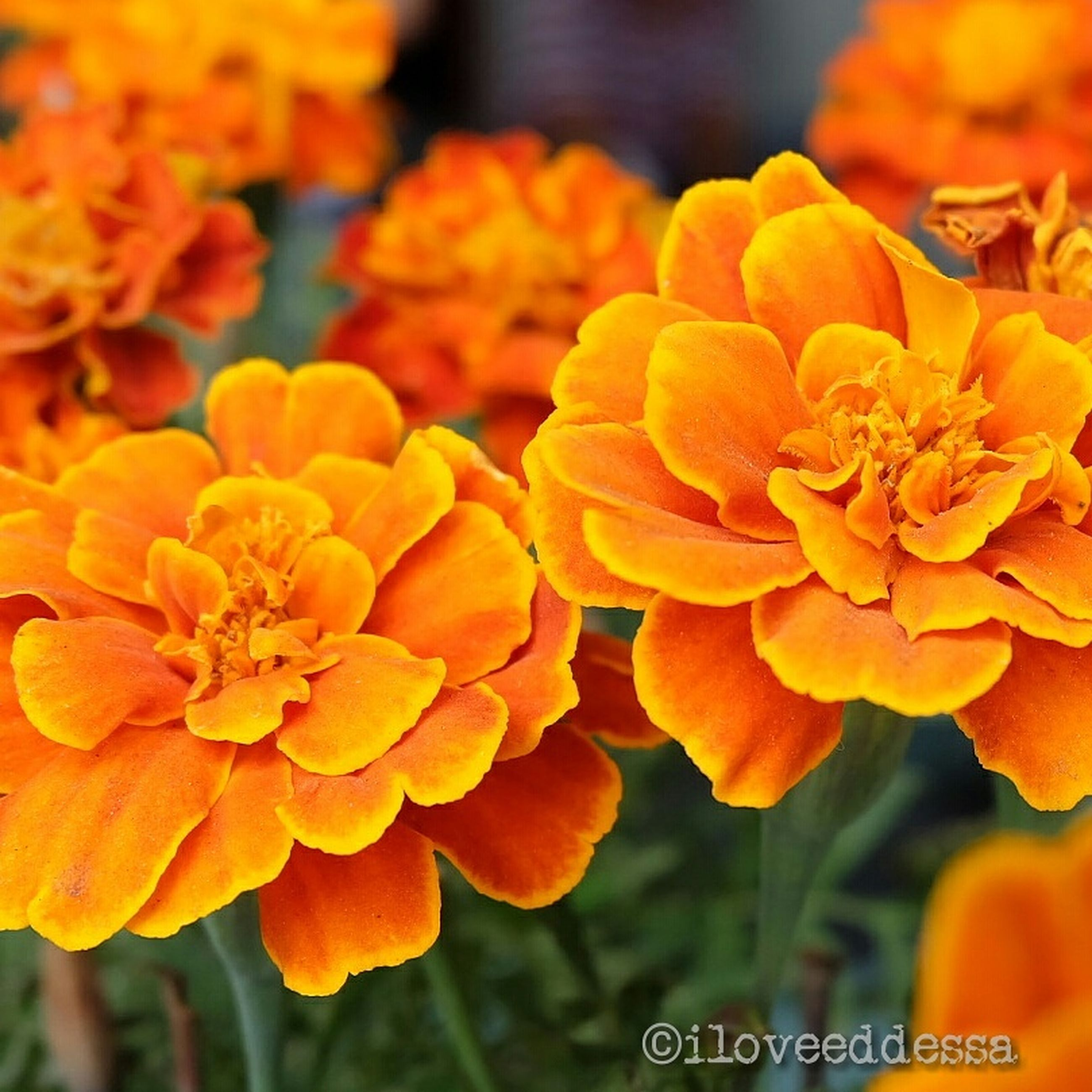 flower, petal, freshness, focus on foreground, close-up, yellow, flower head, fragility, beauty in nature, growth, blooming, orange color, nature, day, no people, selective focus, park - man made space, outdoors, plant, abundance