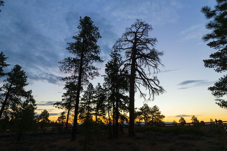 overwhelming sunrise impressions Tree Sky Plant Sunset Scenics - Nature Beauty In Nature Nature Cloud - Sky Tranquility Tranquil Scene No People Non-urban Scene Silhouette Growth Land Landscape Environment Field Forest Low Angle View Outdoors Coniferous Tree Bryce Canyon USA