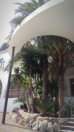 palm trees architecture plants Hotel Galatzo