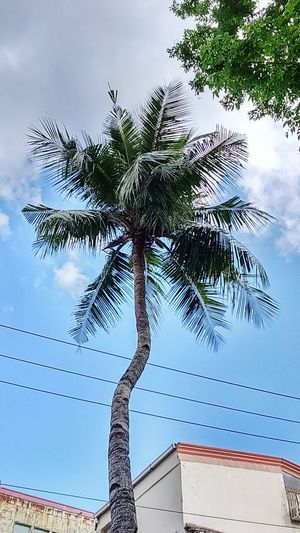 The coconut nut is a giant nut lalalala 🌴🎵🎵 😁 Love Taking Pictures  Hobby Afternoon Shot