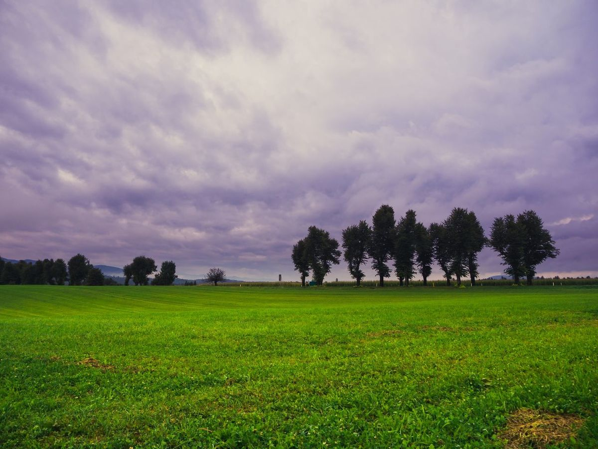 Agriculture Field Tree Beauty In Nature Landscape Cloud - Sky Landscape_photography No People Scenics Tranquility Outdoors Rural SceneShotoftheday Travel Photography IfeelsLOVEnia Shot Of The Day! EyeEm Nature Lover EyeEm Best Shots - Nature