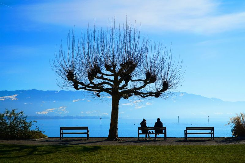 Silhouette people sitting on bench by tree against sky