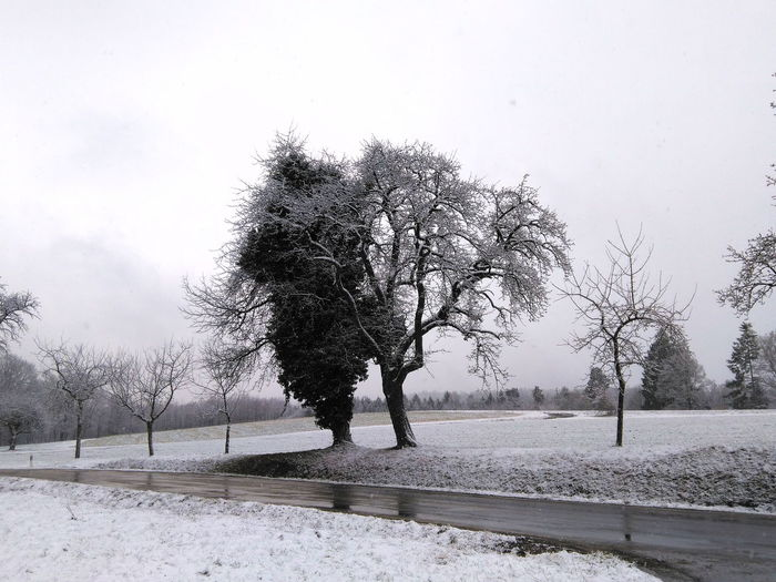 two trees at winter Baden-Württemberg  South Winter Wintertime Backgrounds Bare Tree Beauty In Nature Branch Clear Sky Cold Temperature Coldday Day Germany Landscape Nature No People Outdoors Scenics Sky Snow Tranquil Scene Tranquility Tree Weather Winter
