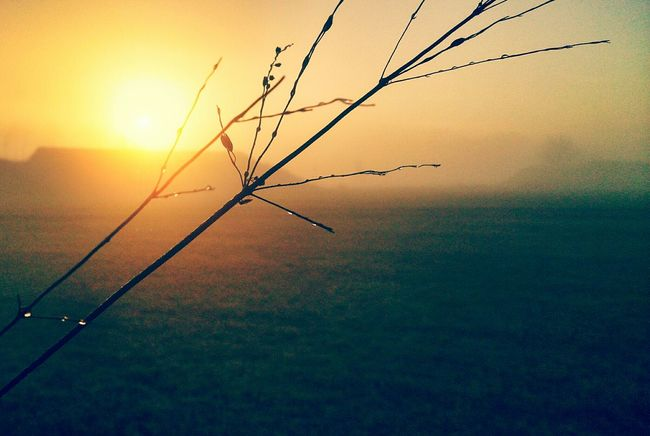 Sunrise Foggy Morning Nature Morning Macro Insects  Grass Fog