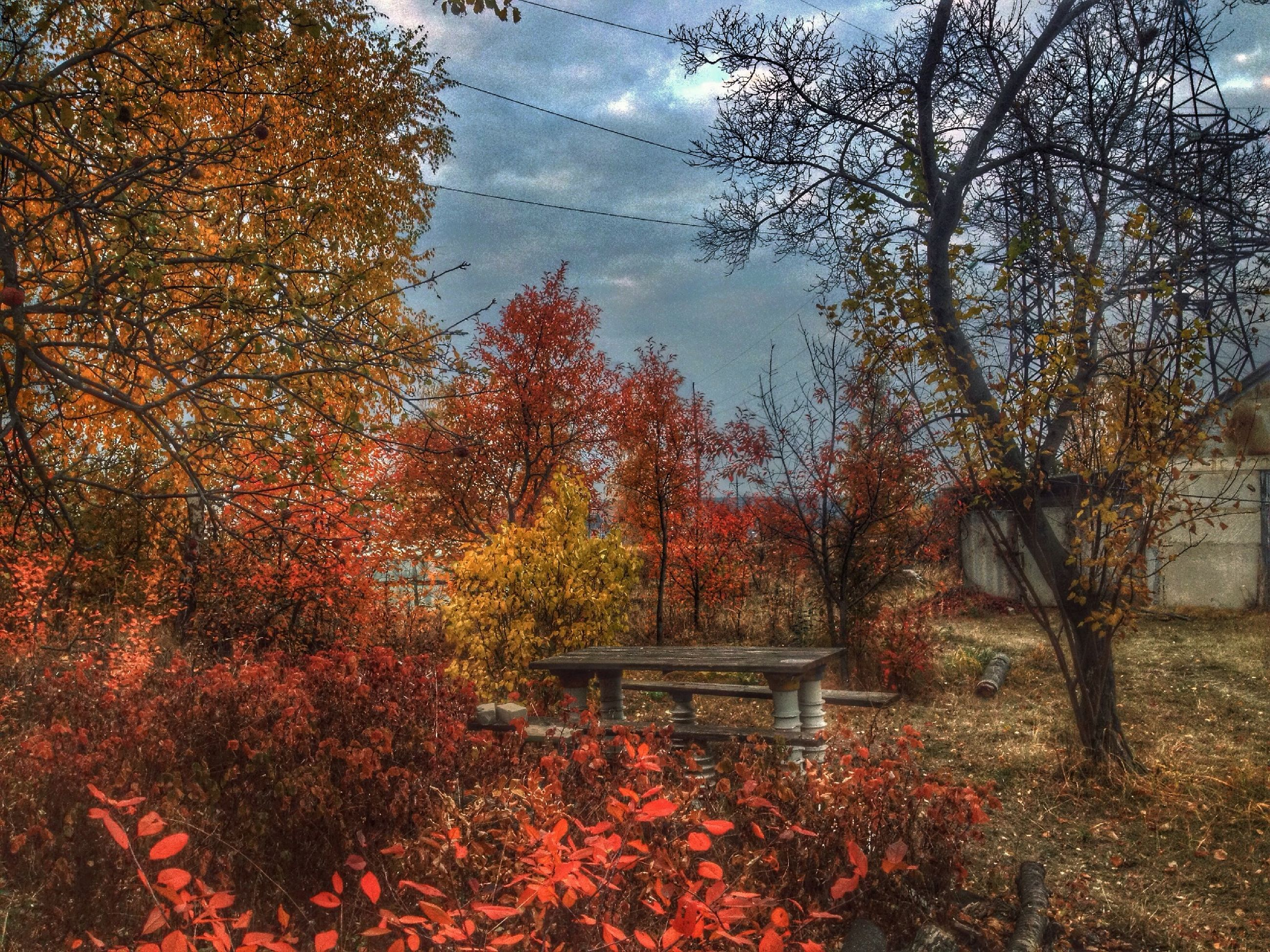 tree, autumn, branch, growth, change, nature, sky, built structure, season, tranquility, building exterior, red, park - man made space, tree trunk, architecture, beauty in nature, day, flower, outdoors, plant