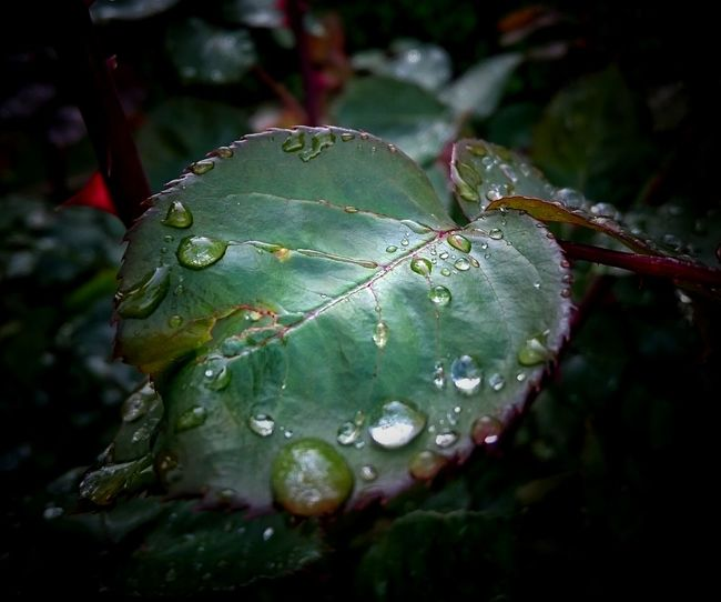 Nature Waterdrops Beauty In Nature Nature_collection Macro Nature Macro Check This Out Close-up EeYem Best Shots Focus On Foreground Leaf 🍂 Leaves And Droplets Leaves