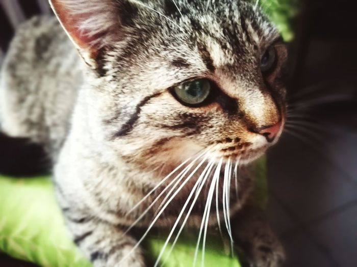 Domestic Cat One Animal Animal Themes Domestic Animals Pets Whisker Close-up Feline Mammal No People Outdoors Nature Day