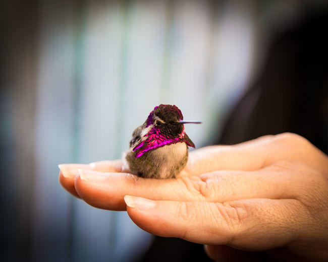 Animal Themes Animal Wildlife Animals In The Wild Bird Close-up Day Focus On Foreground Food Holding Human Body Part Human Hand Mammal One Animal One Person Outdoors People Real People hummingbird EyeEmNewHere
