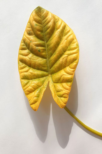 High angle view of leaf on table