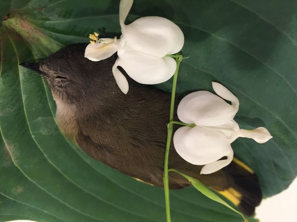 Leaf No People Flower Indoors  Plant Green Color Animal Themes Close-up Warbler Death Nature Fragility Flower Head Bird Beauty In Nature Freshness Mammal Bleeding Heart