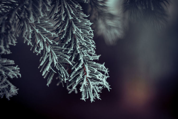 Exceptional Photographs Bokehlicious Bokeh Love Bokehphotography Poland Zima Tree Snowflake Spruce Tree Snow Cold Temperature Winter Branch Fir Tree Ice Crystal Frost Weather Condition