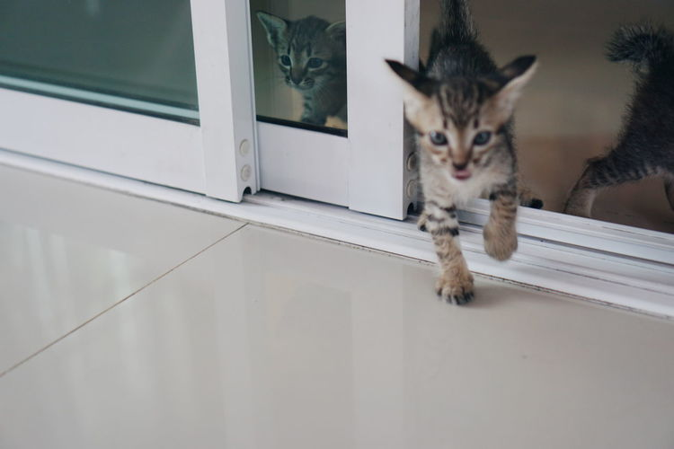 Kittens On Tiled Floor