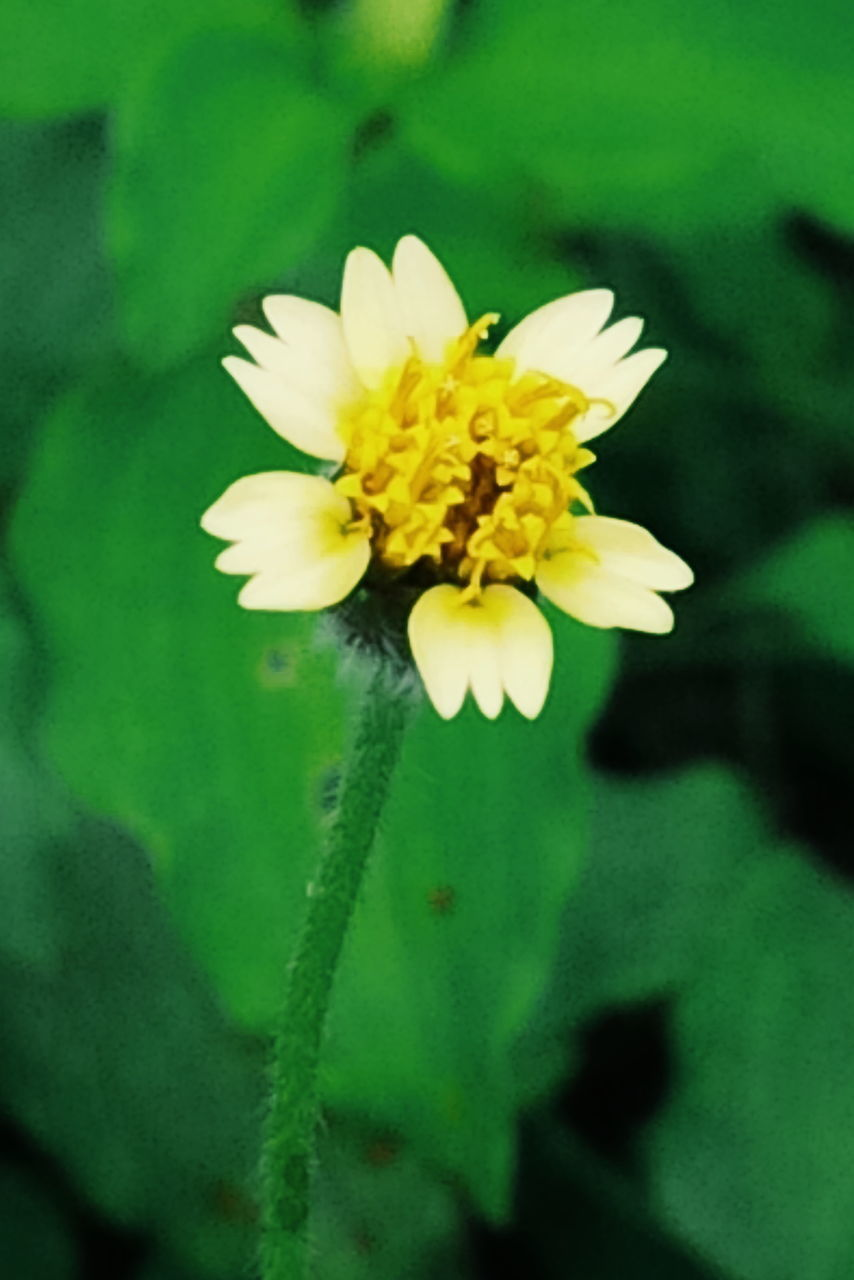 flower, petal, fragility, growth, nature, beauty in nature, freshness, yellow, flower head, plant, close-up, no people, green color, blooming, leaf, outdoors, day