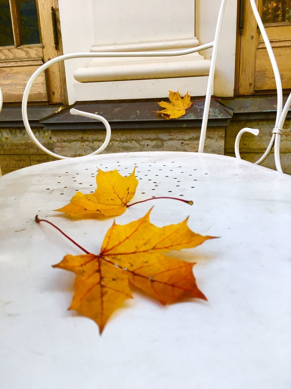 change, no people, leaf, plant part, autumn, nature, white color, day, close-up, yellow, outdoors, seat, still life, leaves, fragility, vulnerability, orange color, plant, table, dry, maple leaf