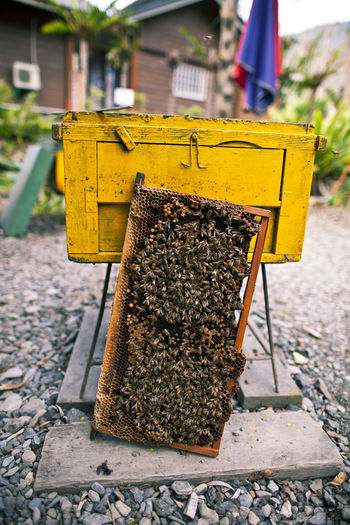 Colony of bees on honeycomb