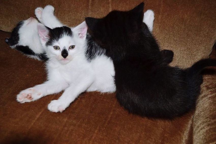 Babycats