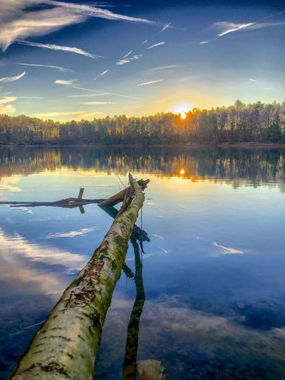 Sunset or sunrise behind the forest as seen from the shore of a lake with a branch leading into the picture and the blue sky and white fluffy clouds reflected in the water surface Water Sky Reflection Lake Tranquility Beauty In Nature Scenics - Nature Tranquil Scene Nature Tree Plant Sunset Cloud - Sky No People Idyllic Outdoors Beach Non-urban Scene Wood - Material Wooden Post