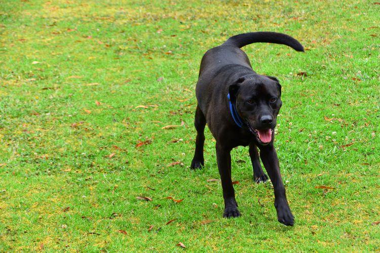 Black dog on field