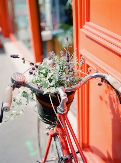 High angle view of plants in bicycle basket