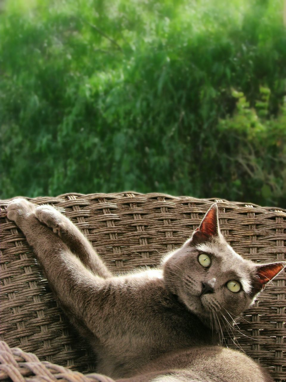 domestic, mammal, pets, cat, domestic cat, domestic animals, feline, one animal, relaxation, vertebrate, no people, day, nature, wood - material, whisker, tree, plant