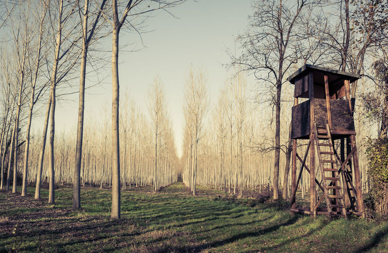 Raised hunting shed. Hunt Tower for deer in forest of poplars. Photo in vintage style. Observation Point Architecture Bare Tree Beauty In Nature Building Exterior Built Structure Day Forest Grass Hunt Landscape Nature No People Outdoors Platform Sky Tower Tranquility Tree