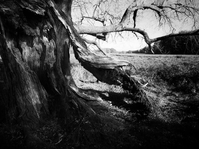 """""""Leviathan waits in the water. Skeletons hide in the trees. The hours crawl by like a spider. Hangman is following me."""" (Mark Lanegan) Bw_collection Light And Shadow TreePorn Melancholic Landscapes The Great Outdoors - 2015 EyeEm Awards"""